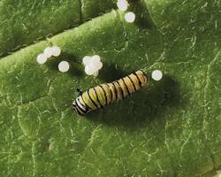 biodiversity issue - image